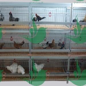 قفس مرغ و خروس زینتیwww.paravar (2) (1)