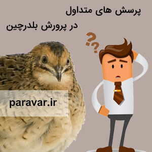 پرسش های متداول در پرورش بلدرچینwww.paravar.ir