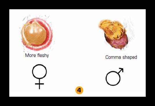 جنسیت غاز3