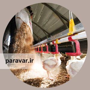 مدیریت بستر طیور گوشتی