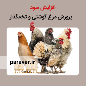 سود پرورش مرغ