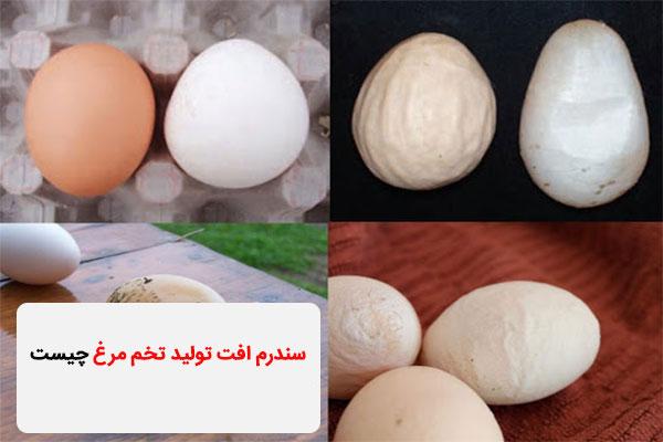 سندرم افت تولید تخم مرغ چیست