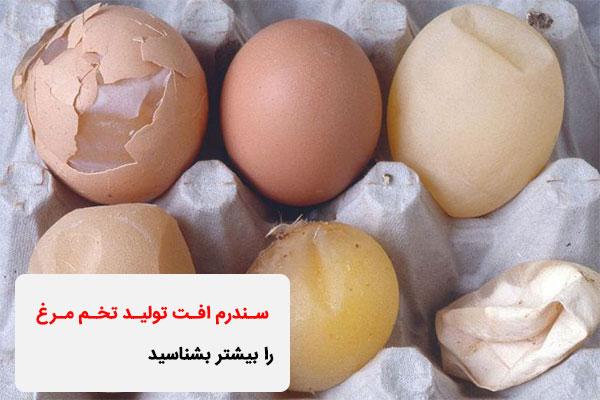 سندرم افت تولید تخم مرغ