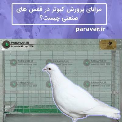 پرورش کبوتر در قفس های صنعتی
